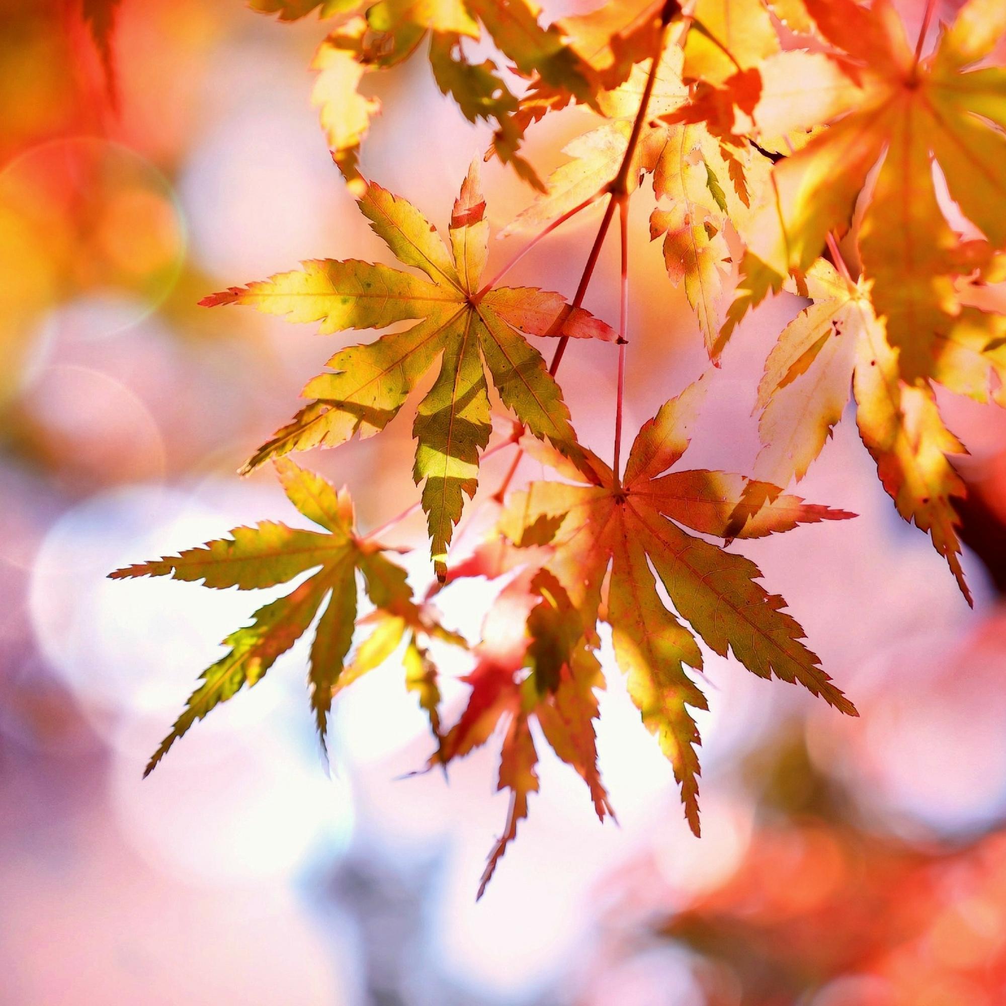 fall bucket list leaf peeping